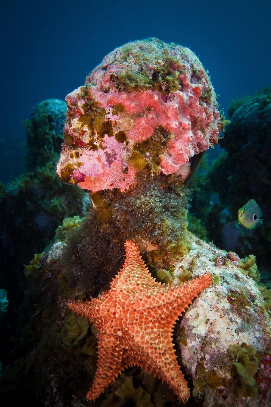 """Một tác phẩm trong bộ sưu tập Sự tiến hóa thầm lặng, độ sâu 8 m được bao phủ trong tảo và san hô.   """"Tôi tạo ra những vật thể vô tri nhưng đại dương thổi hồn cho chúng. Các rạn san hô mới liên tục phát triển, một thế giới mới hình thành này khiến tôi ngạc nhiên"""", Jason cho biết. Ảnh: Jason deCaires Taylor."""