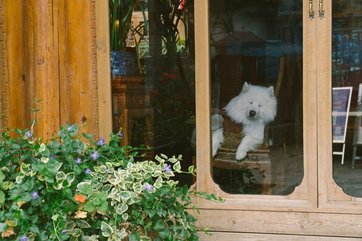 Người dân phố cổ thích nuôi thú cưng. Đây cũng là điểm thu hút du khách yêu động vật.