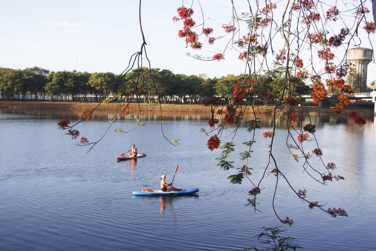 Cây phượng vĩ nằm bên dòng sông Hương trở thành địa điểm lý tưởng cho những người trải nghiệm sup check-in.