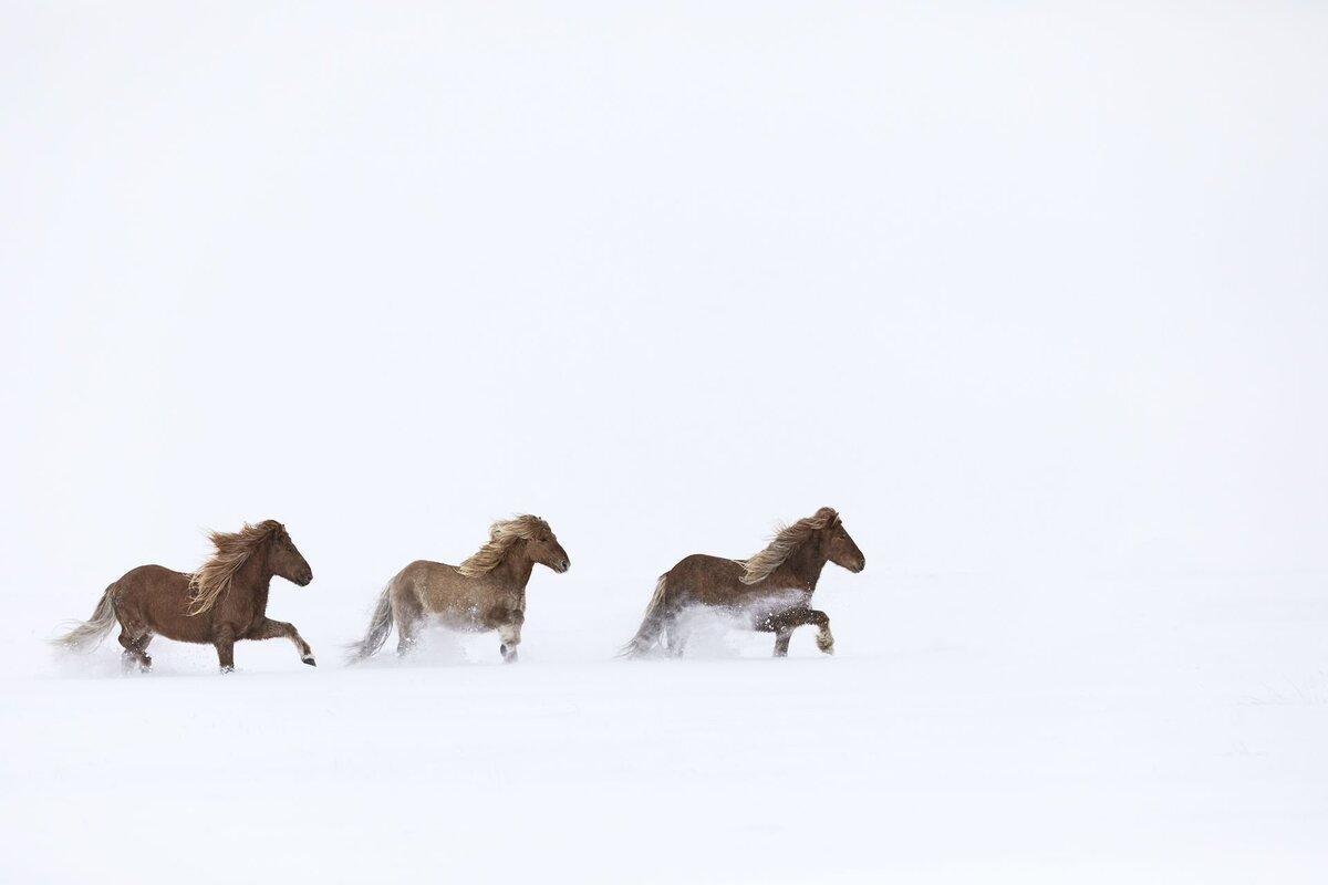 """Iceland sở hữu địa hình độc đáo, từ những bãi biển cát đen đến vùng lãnh nguyên phủ tuyết trắng vô tận. Vẻ đẹp cổ tích của quốc đảo thu hút Drew Doggett, nhiếp ảnh gia và nhà làm phim chuyên nghiệp người Mỹ. Trong chuyến du lịch châu Âu, anh đã thực hiện bộ ảnh """"Trong vương quốc huyền thoại"""", để khắc họa mối liên kết giữa những con ngựa hoang với phong cảnh thiên nhiên ở băng đảo."""