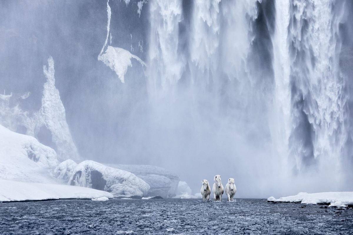 Ngựa Iceland là một trong những giống loài có nhiều màu sắc nhất trên thế giới, với hơn 40 màu và hơn 100 biến thể có nhiều màu lông khác nhau, tuy nhiên chủ yếu là 4 màu trắng, nâu, đen, hạt dẻ.   Bức ảnh trên được tác giả chụp tại Skogafoss, một trong những thác nước lớn nhất của băng đảo, trong mùa đông lạnh giá.