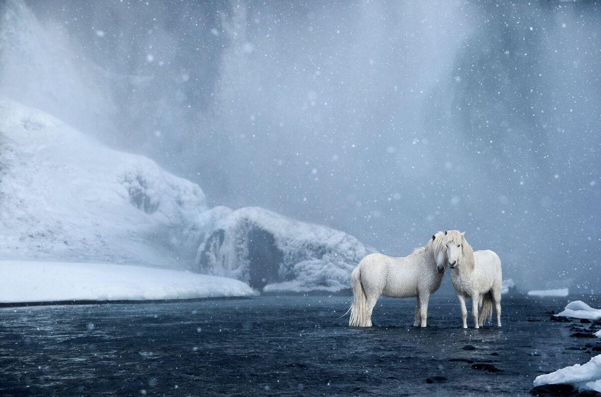 """Những con ngựa trắng trong làn nước """"pha lê"""". Drew Doggett chia sẻ, khi thực hiện bức ảnh này, tuyết bắt đầu rơi nhưng mặt trời vẫn tỏa sáng, tạo thành bức tranh ánh sáng không thể tìm thấy ở nơi nào khác trên thế giới. """"Những con ngựa như đến từ giấc mơ bất tận"""", anh nói. Đứng dưới dòng thác trút như vũ bão với bọt nước mờ ảo che khuất tầm nhìn, chúng vẫn điềm tĩnh và không hề bận tậm. Tất cả tạo nên cảnh tượng hài hòa đến khó tin."""