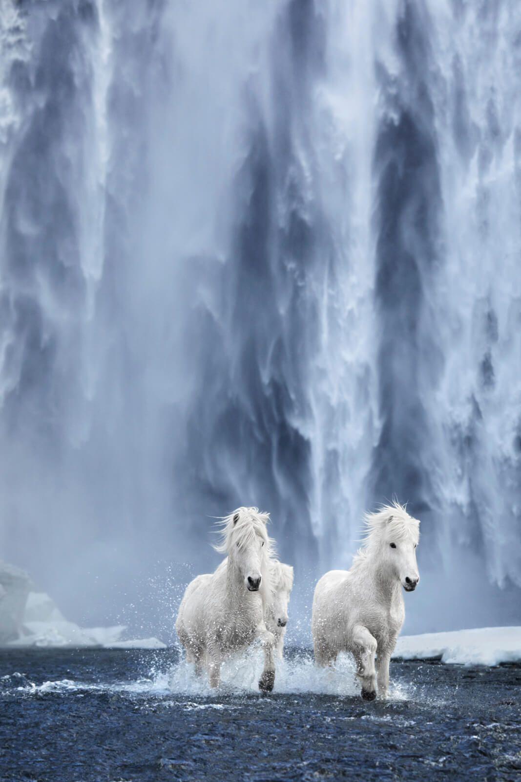"""Tác giả cho biết, anh đã dành hơn 3 tháng để lên kế hoạch về bộ ảnh. Tuy nhiên, anh vẫn gặp vô số thách thức vì điều kiện thời tiết khó lường như tuyết rơi và gió lớn. """"Tôi luôn bị cuốn hút vào những việc gần như không thể thực hiện. Vẻ đẹp siêu thực của Iceland và những con ngựa hoang mang đến khung cảnh ngoạn mục không thể nào quên"""", anh nói."""