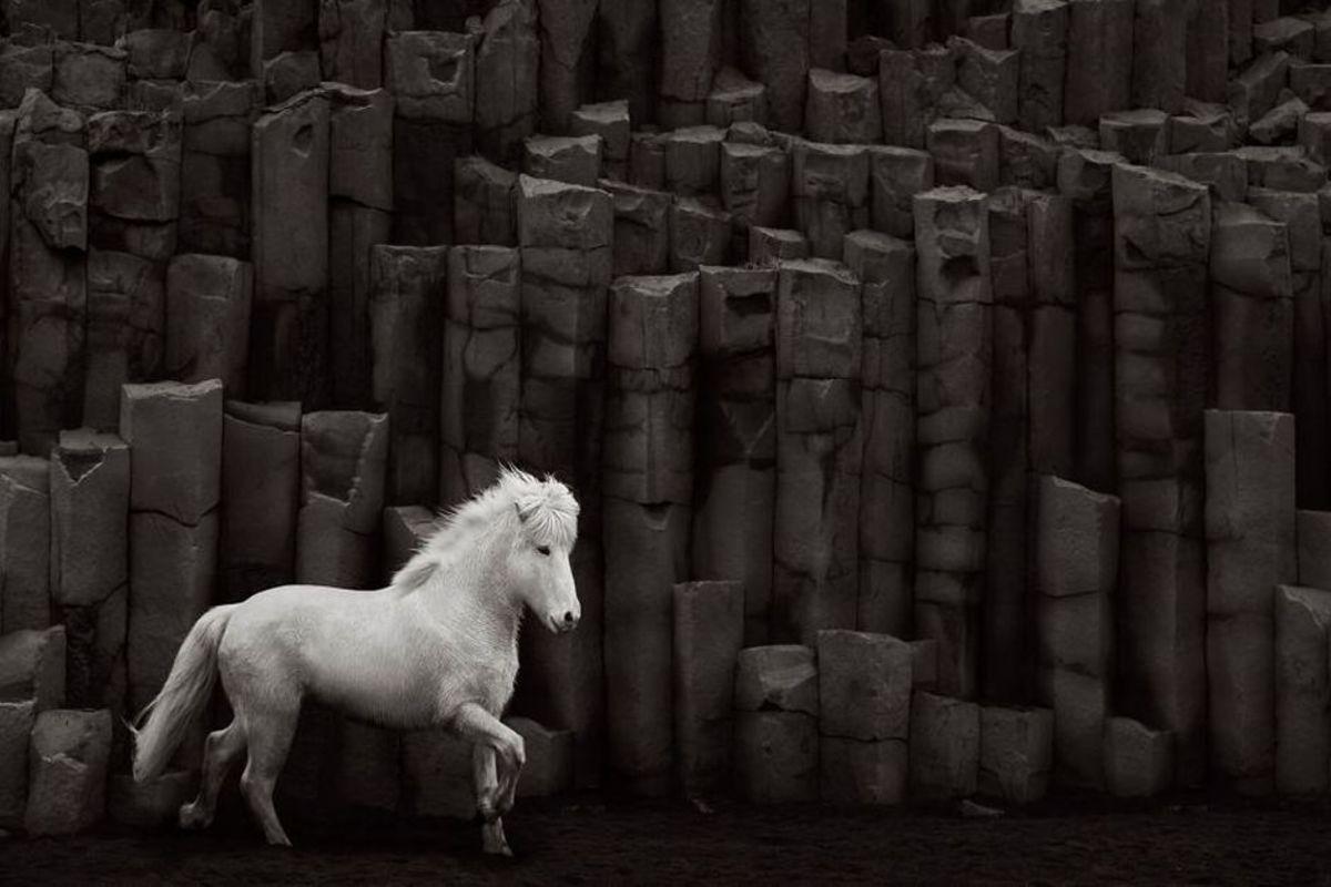 Bức ảnh Vệt sáng cao quý, ghi lại vẻ đẹp đối lập của ngựa trắng với những khối đá đen hình thành từ núi lửa.