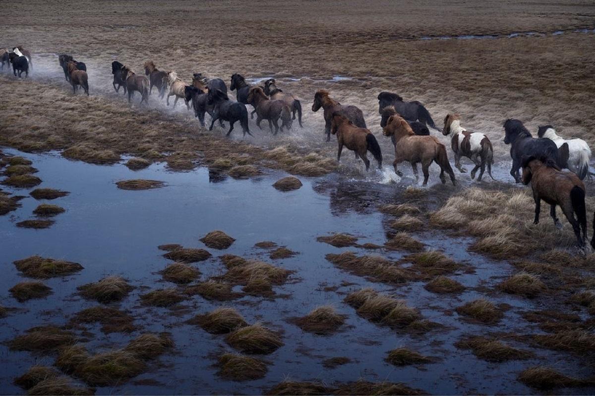 Ngoài tốc độ và sự mạnh mẽ, ngựa ở băng đảo còn mang đặc tính trung thành, thông minh, thích phiêu lưu và thân thiện với con người. Theo truyền thuyết địa phương, chúng là hậu duệ của ngựa thần Sleipnir, ngựa 8 chân của thần ma thuật Odin. Những hình ảnh về Sleipnir được khắc trên các khối đá, ở khu định cư của người bắc Âu cổ.   Ngày nay, dù ngựa không còn được sử dụng để làm phương tiện di chuyển, người dân vẫn coi chúng là đại diện cho đất nước và văn hóa của quốc đảo. Chúng được chăm sóc và sử dụng trong giải trí hoặc các bộ môn thể thao.