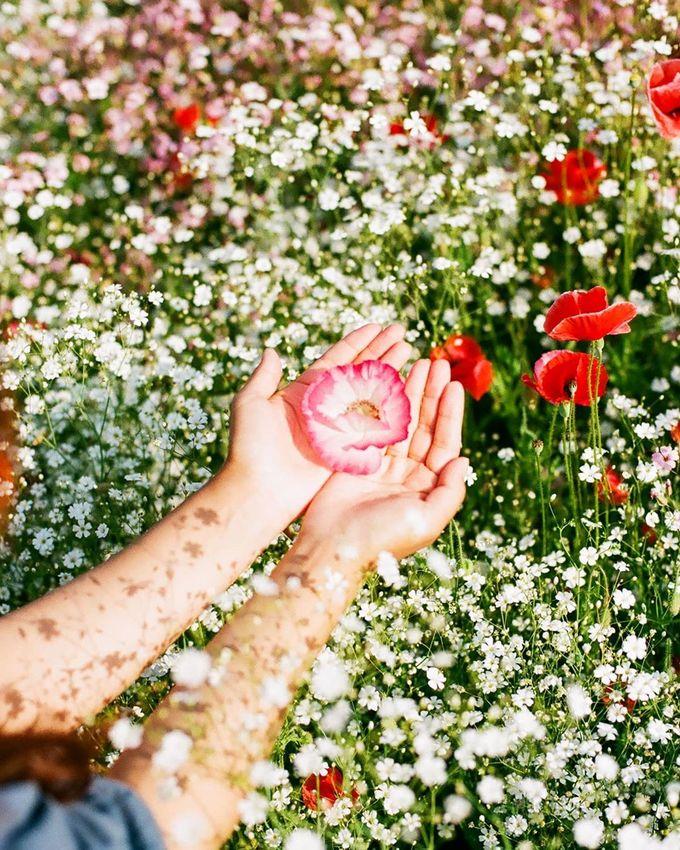 Ở đây, người ta không chỉ trồng poppy đỏ mà còn trồng hoa trắng li ti, hoa hồng làm nền. Cánh đồng trải dài khoảng 3,2 km dọc bờ sông. Những năm gần đây địa phương tổ chức một lễ hội hoa nhỏ để du khách dạo chơi ngắm cảnh sau khi kết thúc mùa hoa anh đào. Ảnh: sunshower_ch