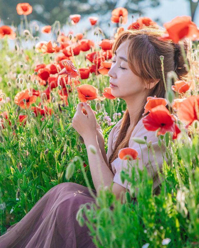 Không ít nhiếp ảnh gia về đây săn hoa, khiến nó trở thành một trong những điểm đến ở Hàn Quốc được check-in nhiều trên Instagram suốt mùa dịch. Bạn có thể thoải mái ngồi tạo dáng sát những bông hoa hay chụp với cả cánh đồng mà không sợ dính người. Ảnh kimvo97