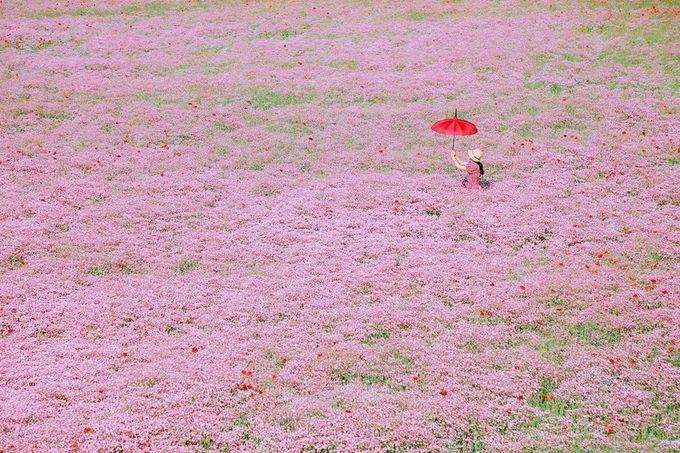 Cả cánh đồng không có một bóng râm, vì thế bạn nên trang bị kem chống nắng, mang theo ô hoặc mũ... đồng thời làm phụ kiện chụp ảnh ảo diệu. Lễ hội hoa năm nay bị hủy bỏ do dịch, nhưng bạn vẫn có thể đến chơi và đừng quên đeo khẩu trang. Ảnh jjoo_kkyu