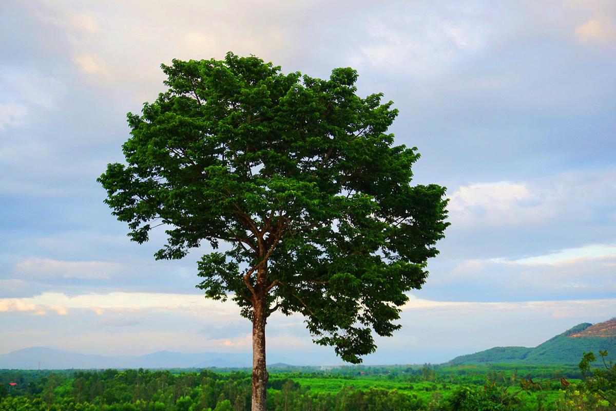Nếu đã đến đây đừng quên cây cô đơn hồ Núi Một đứng giữa dốc núi. Dựa vào cây bạn có thể vừa nghe tiếng gió thổi vi vu, vừa phóng tầm mắt xuống rừng bạc hà xanh mát trong ánh chiều, cảm giác như mọi buồn phiền cứ thế trôi đi.