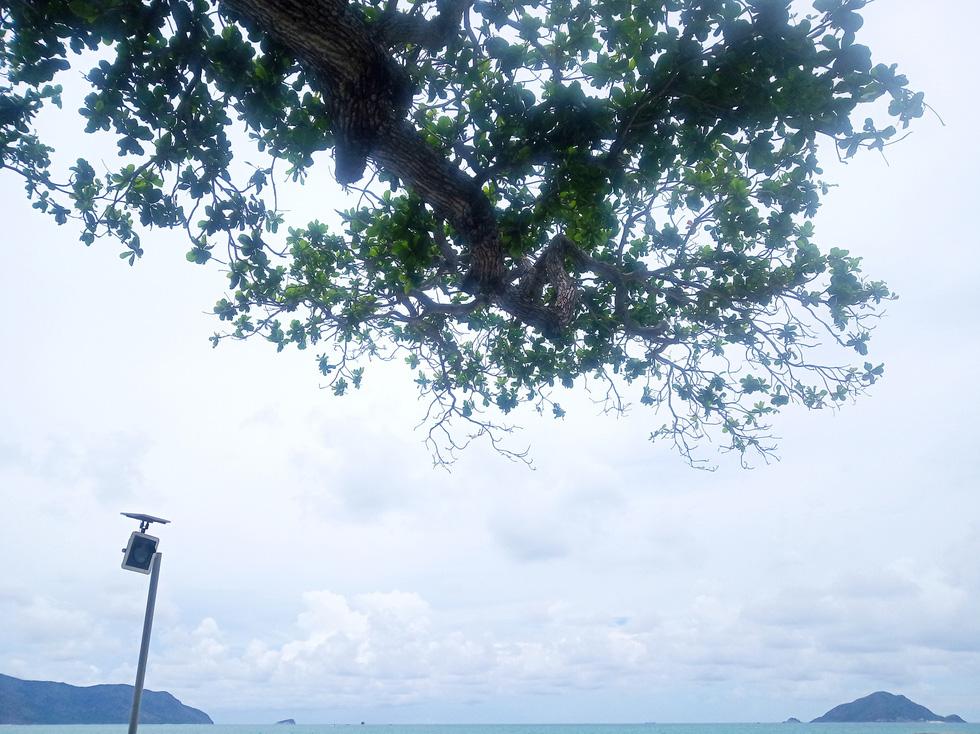Cây bàng trên đảo được trồng nhiều, hầu hết có tuổi đời hơn 50 năm. Chính vì thế, hạt bàng cũng trở thành đặc sản của Côn Đảo