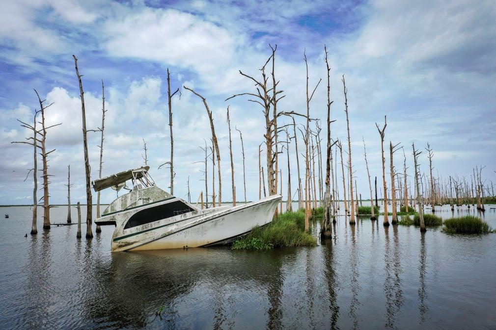 Một chiếc tàu bị bỏ rơi nằm trơ trọi bên những cây bách chết ở Venice, Louisana. Sự xâm nhập mặn và sụt lún khiến số cây bách chết khô ngày càng nhiều ở khu vực này. Ảnh: Drew Angerer/Getty Images.