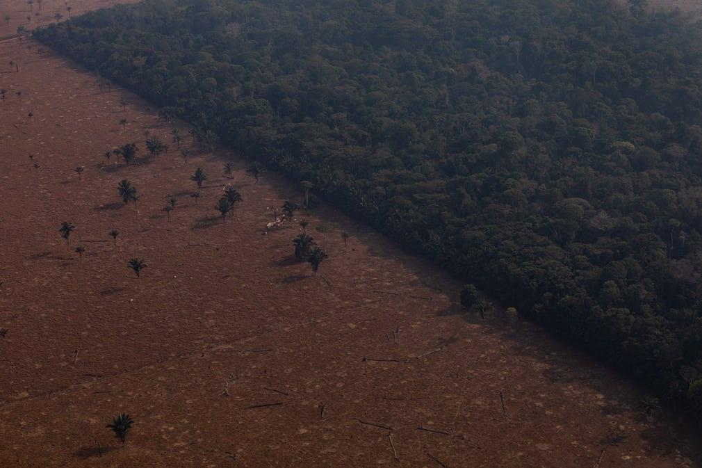 Một phần của rừng mưa nhiệt đới Amazon ở Candeias do Jamari (Brazil) đã bị xóa sổ. Ảnh: Victor Moriyama/Getty Images.