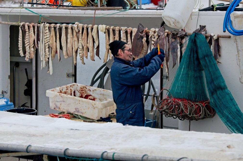 Người đàn ông đang sấy cá tuyết ở bến cảng Ilulissat. Cá muối và cá khô là 2 thực phẩm phổ biến khắp Greenland. Ilulissat là nơi sinh sống của 4.600 người và 3.500 con chó kéo xe. Vào năm 1741, thành phố mới đầu được xây dựng với vai trò như một khu vực giao thương, là vùng đất lớn thứ 3 ở Greenland sau thủ đô Nuuk và Sisimiut.