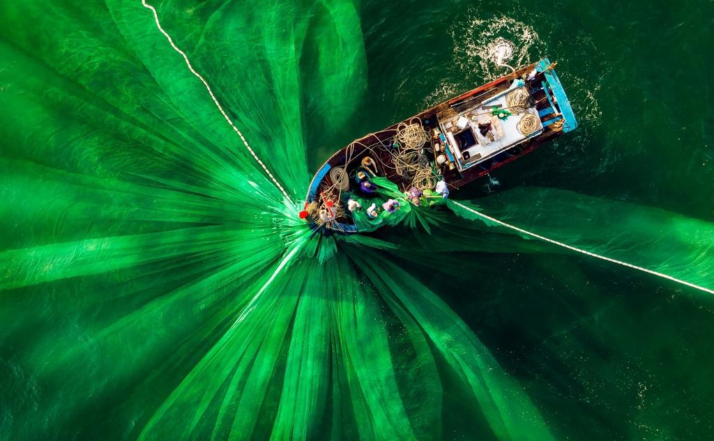 """Tác phẩm """"Đánh cá"""" của nhiếp ảnh gia Alex Cao đã lưu lại khoảnh khắc tuyệt diệu của biển cả và con người. Bức ảnh được chụp tại vùng biển Quảng Ngãi trong một buổi sớm mai. Dưới ống kính trên cao, tay săn ảnh bắt được tạo hình lưới vây xanh độc đáo cùng nét đẹp lao động của ngư dân xứ biển miền Trung. Chia sẻ với Agora, Alex Cao cho biết: """"Vào thời điểm này, nước rất trong và thuyền đang giăng được mẻ lưới đầy ăp cá cơm""""."""