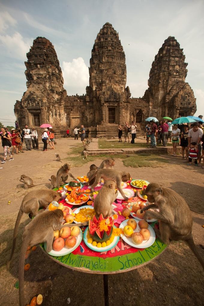 """Không ít người mua trái cây, nước ngọt... cho chúng ăn để chụp ảnh. Trên các trang du lịch, từ khóa Lopburi thường gắn với hình ảnh những chú khỉ nghịch ngợm, nên nhiều người gọi đây là """"thành phố khỉ"""" của Thái Lan. Khỉ trêu đùa du khách nhưng không hung dữ. Người dân chung sống hòa bình với khỉ trong thành phố bao lâu nay. Tuy nhiên gần đây, thành phố không còn đón du khách quốc tế do ảnh hưởng của Covid-19, khiến một trong những nguồn thức ăn chính của khỉ bị giảm đáng kể. Chúng trở nên xấu tính, đánh nhau tranh giành đồ ăn hay thậm chí cướp thức ăn của người dân."""