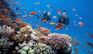 Bãi Xếp, Hòn Dài, Hòn Tai... là những địa điểm lặn ngắm san hô lý tưởng cho chuyến khám phá thế giới sống động và nhiều màu sắc dưới đại dương. Với mức giá khoảng 150.000-1,4 triệu đồng, bạn có thể lựa chọn cho mình một hình thức lặn biển phù hợp để khám phá thế giới dưới nước ở Cù Lao Chàm. Ảnh: Wygo.club.