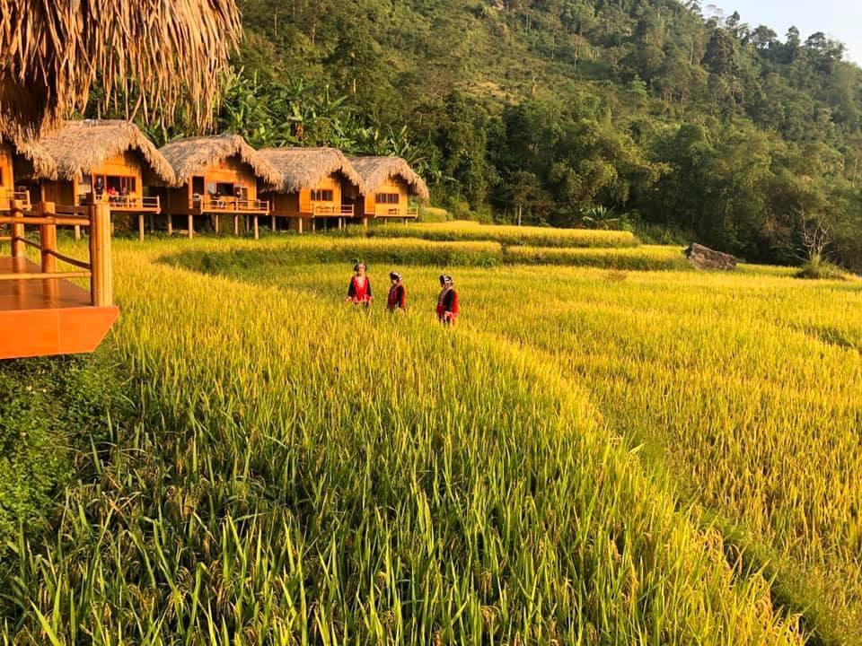 Hoang Su Phi Lodge, homestay ngắm mùa lúa đẹp xuất sắc ở Hà Giang -  iVIVU.com