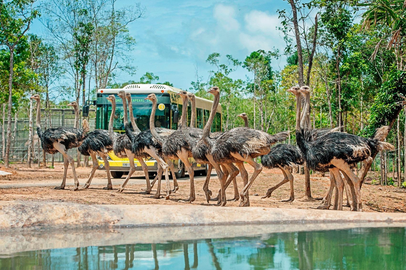 Vinpearl-Resort-Spa-Phu-Quoc-ivivu-14