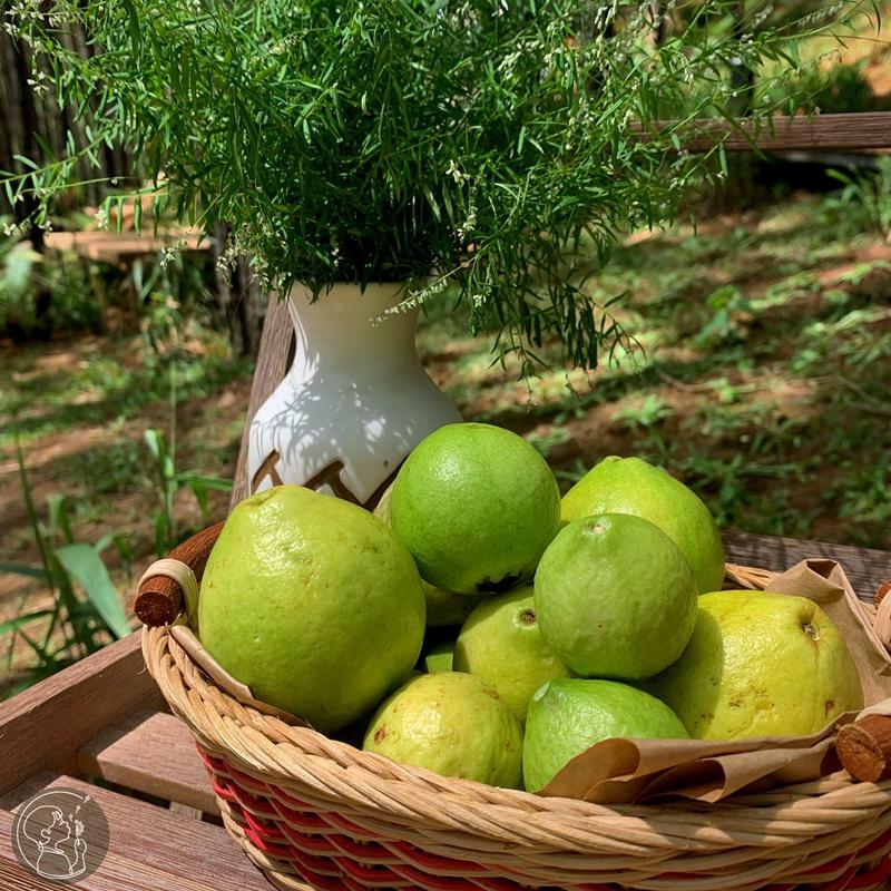 ca-nha-cung-vui-tai-rung-thong-mo-farm-bistro-giua-rung-da-lat-ivivu-00