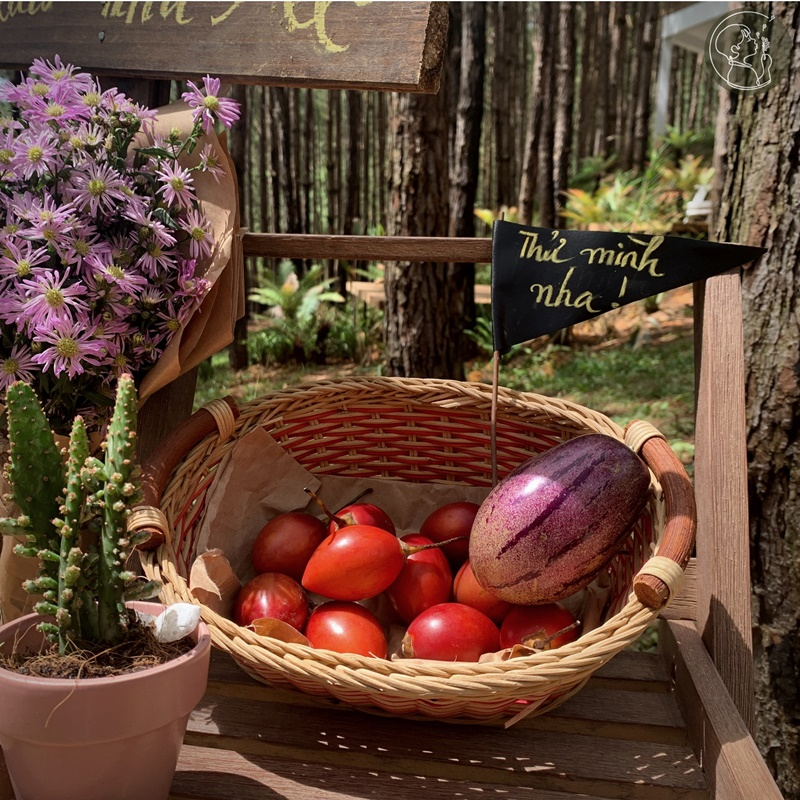 ca-nha-cung-vui-tai-rung-thong-mo-farm-bistro-giua-rung-da-lat-ivivu-01