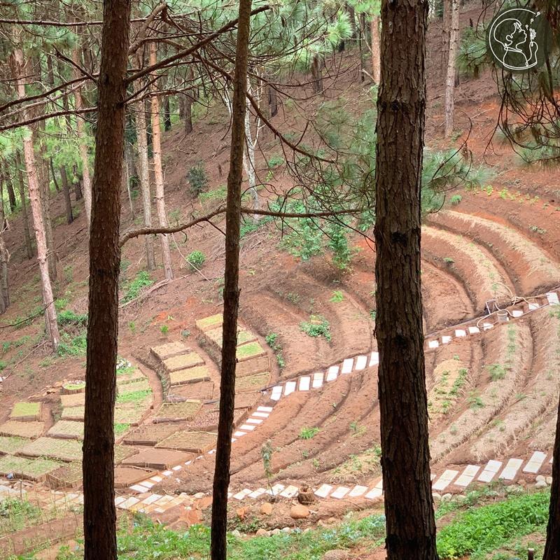 ca-nha-cung-vui-tai-rung-thong-mo-farm-bistro-giua-rung-da-lat-ivivu-04