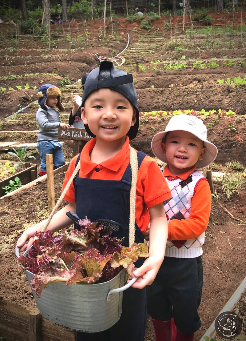 ca-nha-cung-vui-tai-rung-thong-mo-farm-bistro-giua-rung-da-lat-ivivu-07