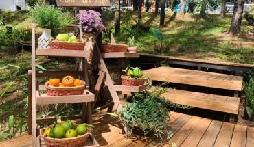 ca-nha-cung-vui-tai-rung-thong-mo-farm-bistro-giua-rung-da-lat-ivivu-08