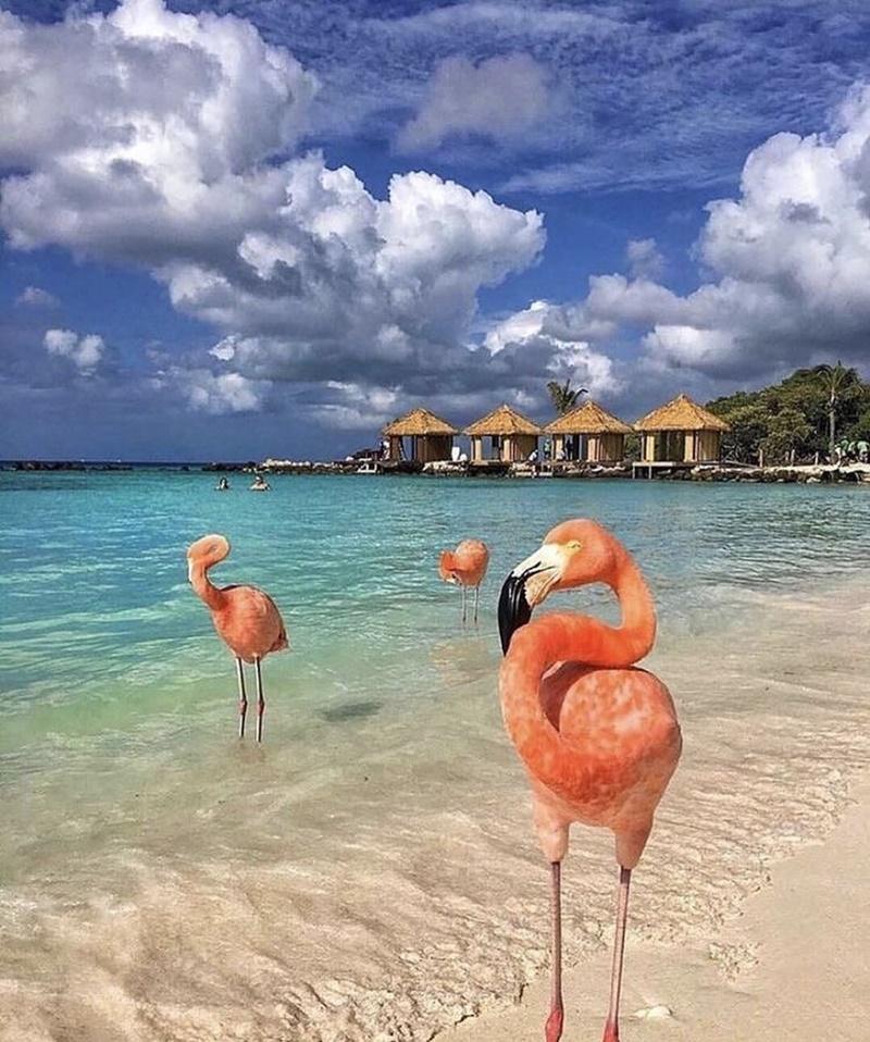 ghe-qua-dao-hong-hac-aruba-o-vung-bien-caribe-ivivu-1