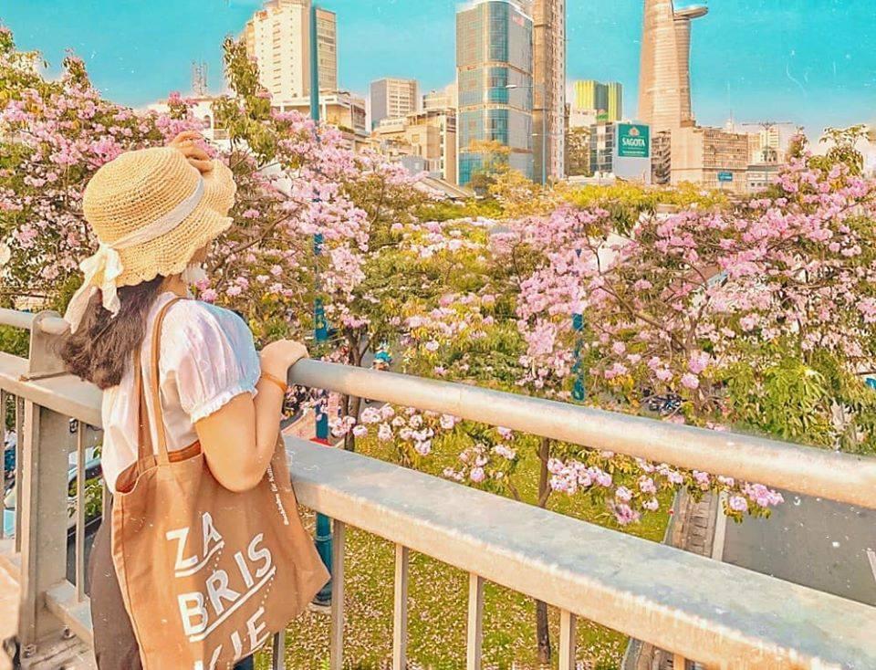 Sài Gòn vào mùa hoa Kèn Hồng nở rộ vô cùng lãng mạn