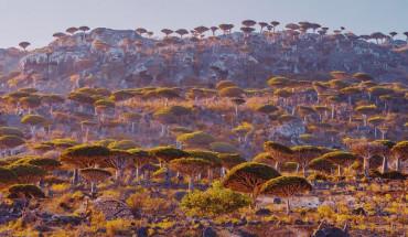 Hon-dao-Socotra-duoc-vi-nhu-ngoai-hanh-tinh-ivivu-3