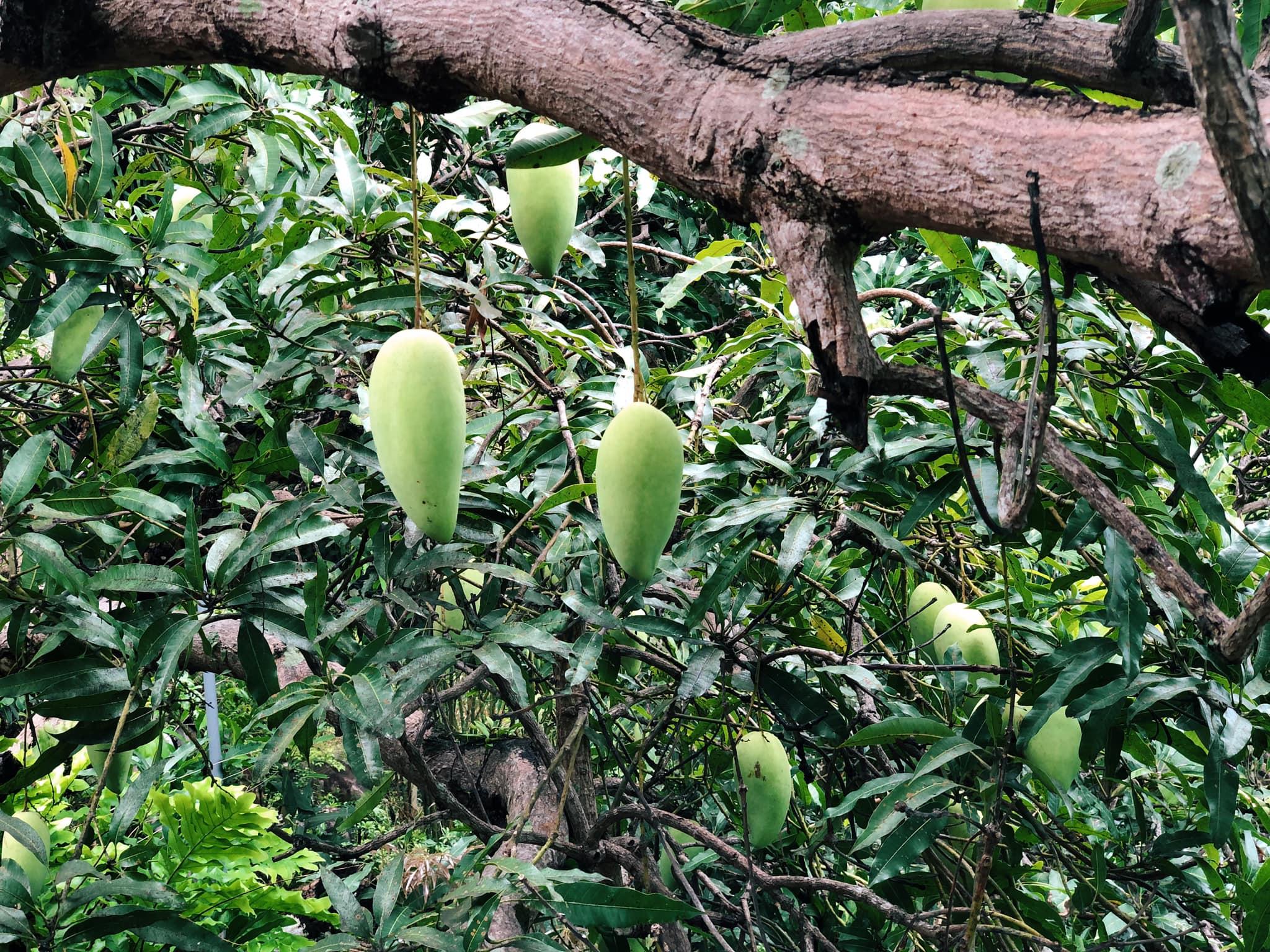 mango-house-hon-son-ivivu-17